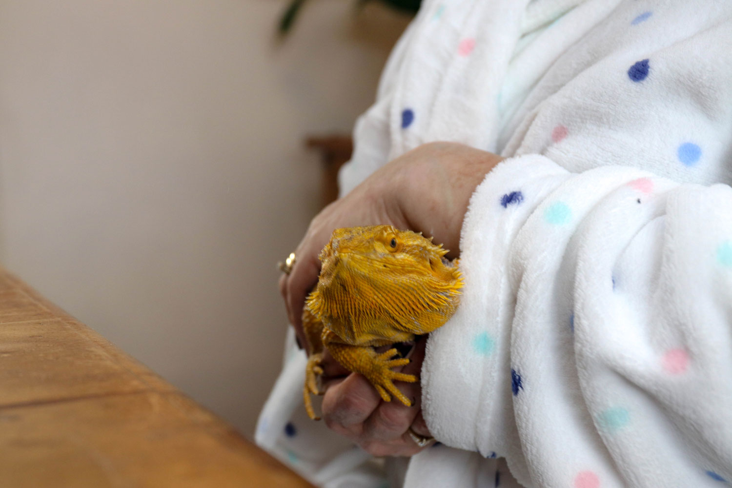 Image of a Home Safari pet lizard being held by a service user.